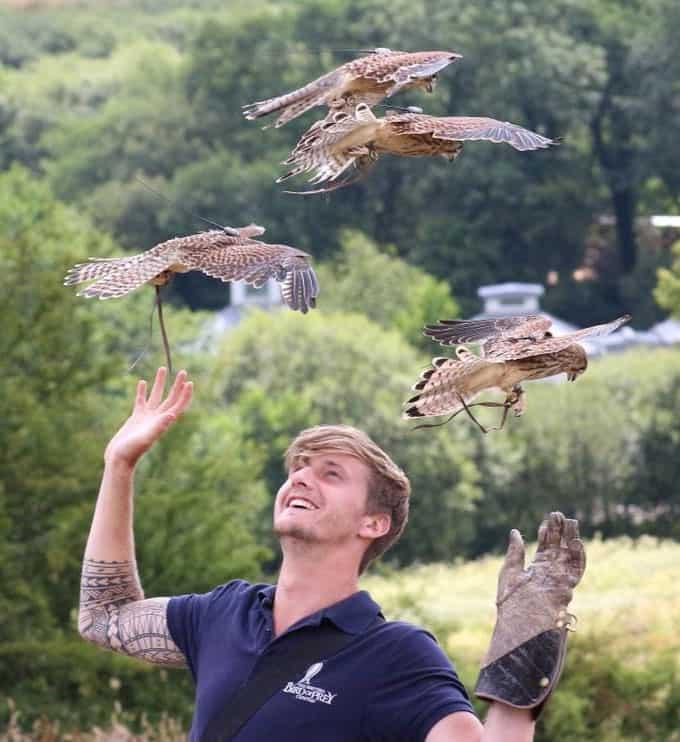 Pembrokeshire Falconry
