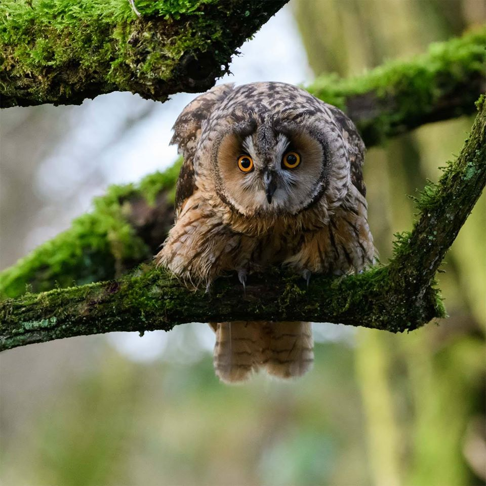 Wildlife Trust of South & West Wales